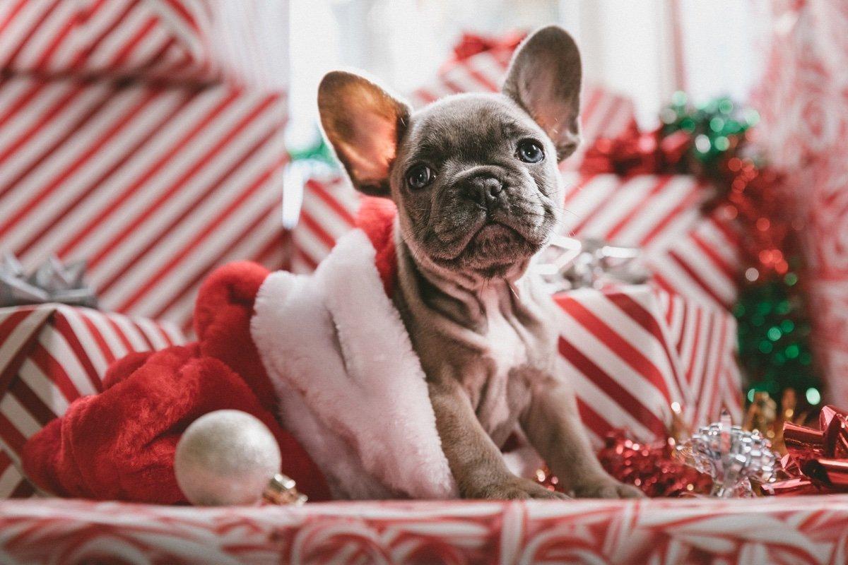 God Jul – so wird Weihnachten in Schweden gefeiert 1